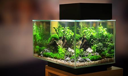 Achat mat riel aquarium et aquariophilie en ligne for Boutique aquariophilie